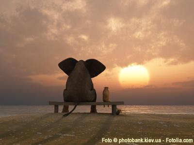 Elefanten Kaffee - einzigartig mit einer speziellen Produktion