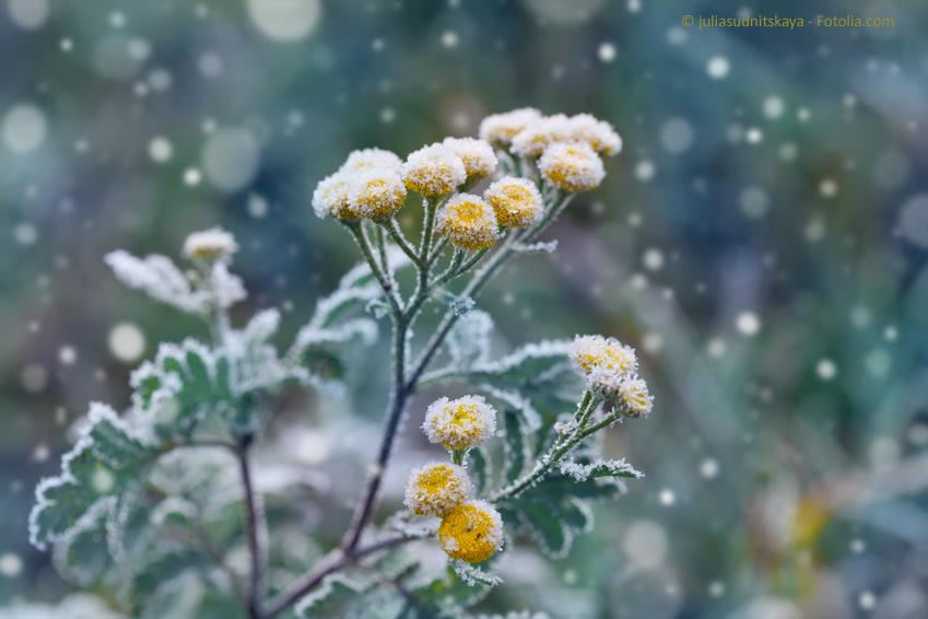Auch die Natur kündigt Weihnachten an