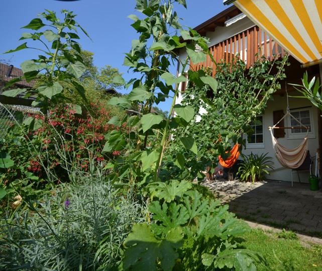 Originelle Gartenplanung Bild 3: Aussenansicht des Sichtschutzes