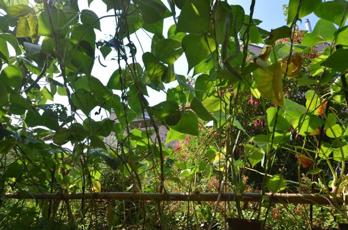 Originelle Gartenplanung Bild 2: Den biologischen Sichtschutz am Boden fixiieren