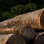Holz wächst in der Schweiz schnell nach.