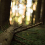 Der Wald: natürliches Wachstum und Recycling