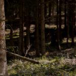 Naherholungsgebiet Wald