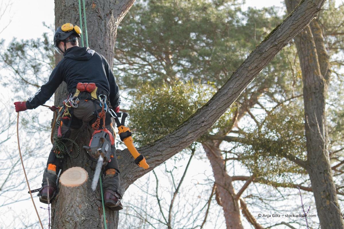 Bäume im Garten fällt man am besten in der kalten Jahreszeit