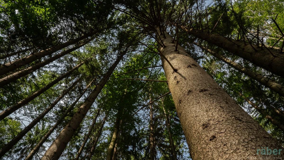 Mondholz: Gibt es einen idealen Zeitpunkt einen Baum zu fällen?
